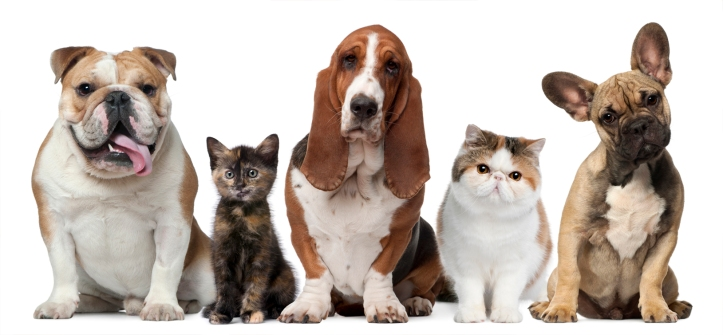 Group of cats and dogs